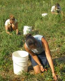 Agriculture Course Services