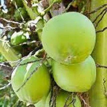 Green Exotic Fruits Tropical Fruits - Gree...