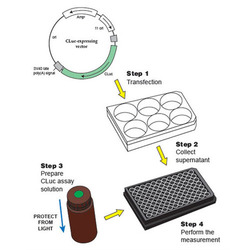 Luciferase Assay System