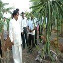 Fruit Cultivation