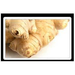Ginger Herbal Extract