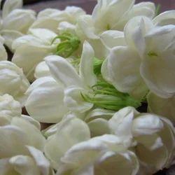Fresh Flowers Rose Flower Exporter Wholesaler from Chennai