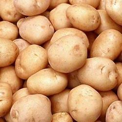 Oval Brown Chipsona Potato