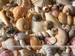 Decoration Shells