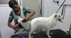 Cats And Dogs Pet Grooming Salon