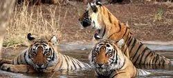 Rajasthan Wildlife With Taj Tour Package