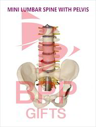 Mini Lumbar Spine with Pelvis