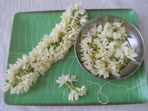 Is Western Union Safe >> Wedding Flowers - Indian Mullai Flower Exporter from Coimbatore