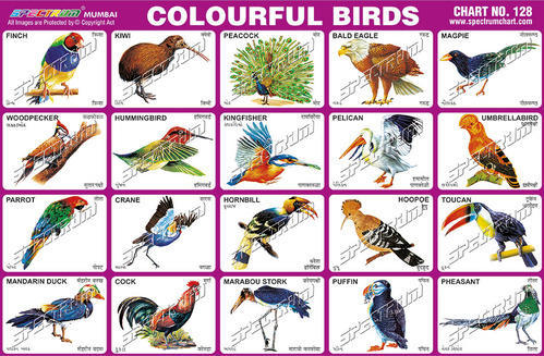 Indian birds pictures and names - digitalspace info