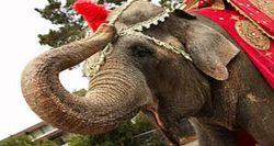 Elephant And Camel Arrangements