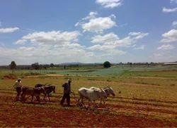 Agriculture Management Services