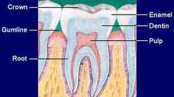 Root Canal Treatment & Fillings