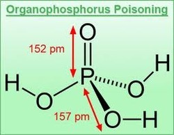 Organophosphorus Insecticides