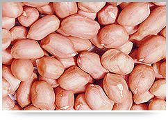 Peanut Kernel Without Shells