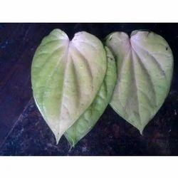 Mogai Betel Leaf
