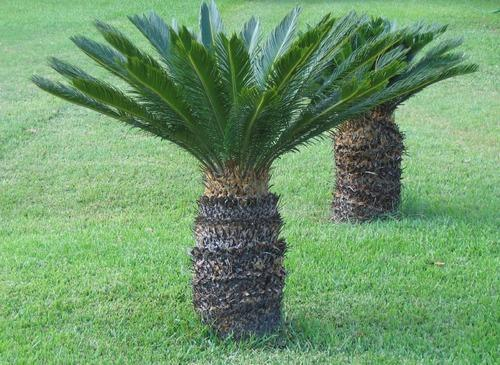 outdoor plant at rs 99 piece s outdoor plant id 8128174712