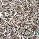 Adenium Seeds