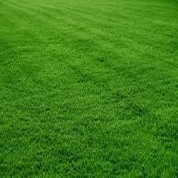 Lawn Grass Manufacturers Suppliers Amp Exporters