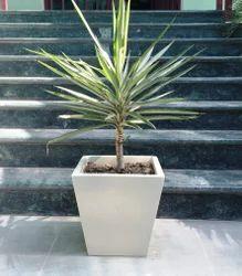 Cabernet Planter