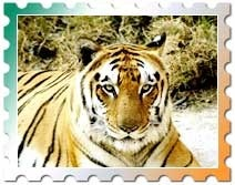 Golden Triangle & Tigers Tour Package