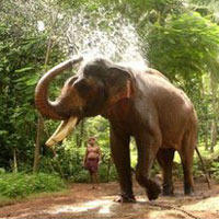 Kerala With Alleppey Wildlife Tours