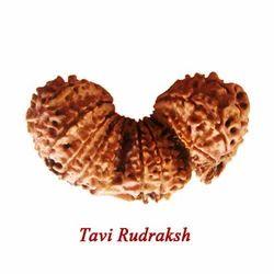 Tavi Rudraksha