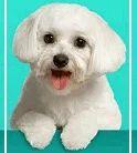 Dental Care For Pets