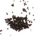 Petunia Seeds