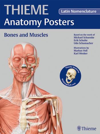 Anatomy - Anatomy Flash Cards Anatomy on the Go Books Wholesale ...