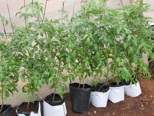 Grow Bags Verti Grow Bags Manufacturer From Bengaluru