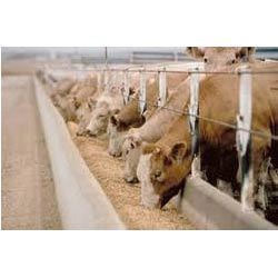 Animal Nutrition Supplements Testing Services
