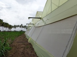 Tunnel Type Shade Greenhouse Maintenance Services