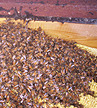 Non-Living Beehive Removal