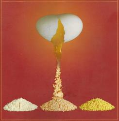 VHPL Food Ingredients Egg Yolk Powder, Packaging Size: 20 Kgs
