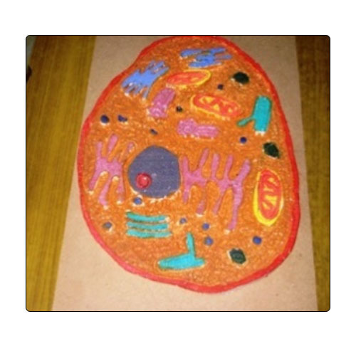 dummy models plant cell model for science project