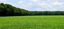 Properties/Land Dealing