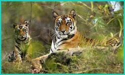 Rishikesh Wildlife Tour