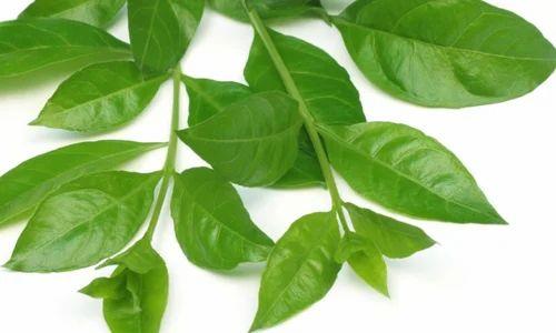 Henna Medicinal Herbs Thenkarai Theni Dharanisri Expo Id