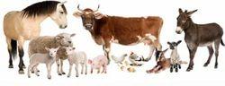 Animal Health Care Centres