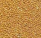 Millet Yellow
