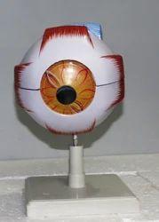 PVC Eye Model