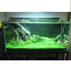 Garden Aquarium Aqua Garden Aquarium Manufacturer from Mumbai