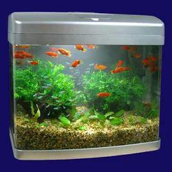 Fish Aquarium Wholesale Price Amp Mandi Rate For Fish Aquarium