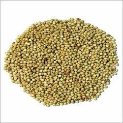 Sorghum Grains (Sorghum Meal)