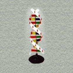 DNA Activity Anatomy Model