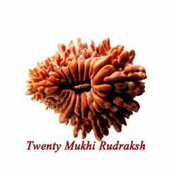 Twenty Mukhi Rudraksha