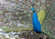 Nandini Wildlife Sanctuary