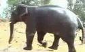 Rajasthan Wildlife Safari Trip Package
