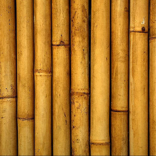 150fa3cb422a Bamboo at Best Price in India