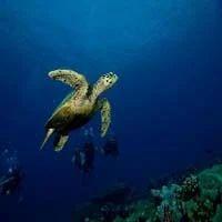 Agatti Island Resort - Lakshadweep